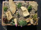Osázená keramika :: osázené koryto