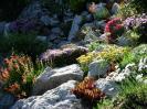 kvetoucí skalka