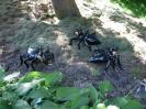 Obří, geneticky modifikovaní mravenci.